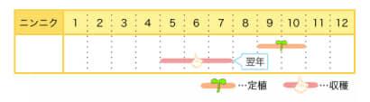 ニンニクのプランター栽培カレンダー