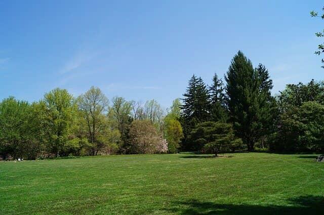 lawn yard