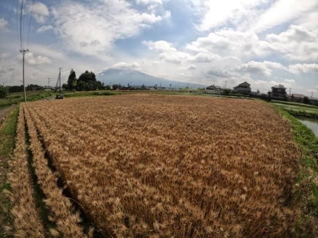 久松達央さんのジツロク農業論【実践編 No.2】多品目有機栽培で直販をするためには断捨離も必要