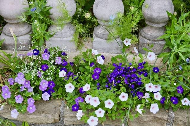 青や白の花