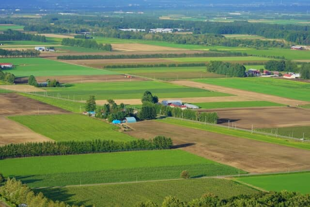 広々とした畑の風景
