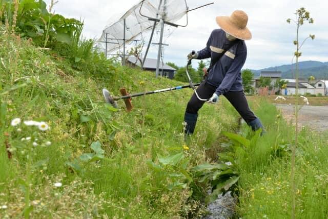 草刈り中の様子