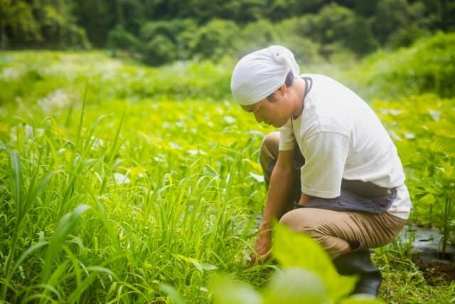 草むしりをする男性