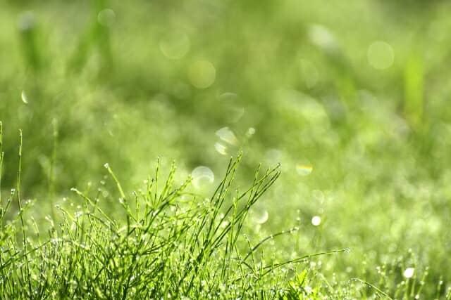 草のある風景