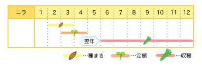 ニラのプランター栽培カレンダー