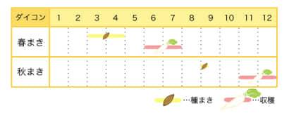 ダイコンのプランター栽培カレンダー