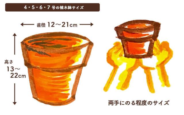 4・5・6・7号の植木鉢のサイズ