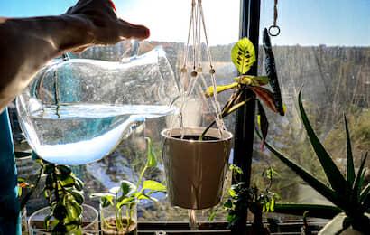 植物に水を与える