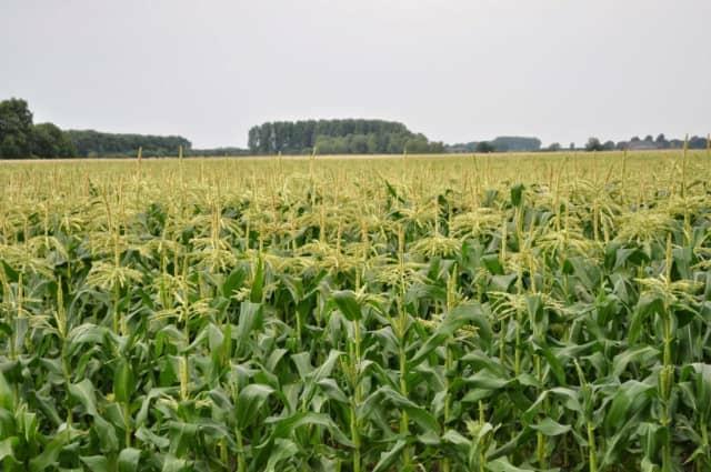 オランダの畑作