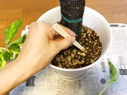 割り箸で土に穴をあける