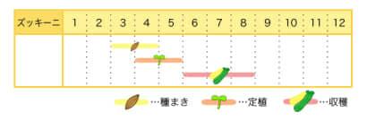 ズッキーニのプランター栽培カレンダー