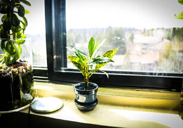 窓際の植木鉢