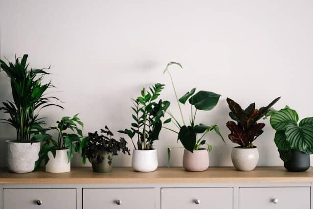 さまざまなサイズの植木鉢と観葉植物