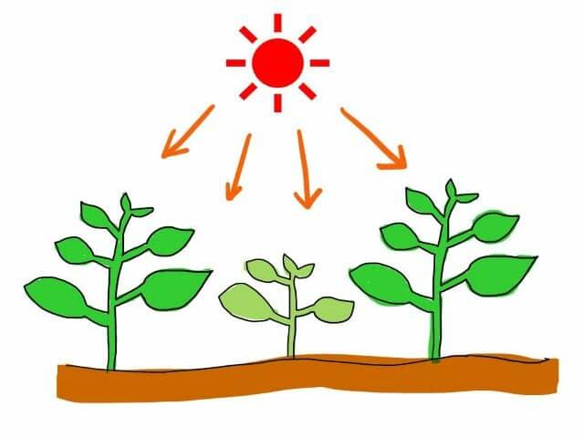 光合成を促進するためには?生育の効率を高め、収量増加や品質向上を目指す