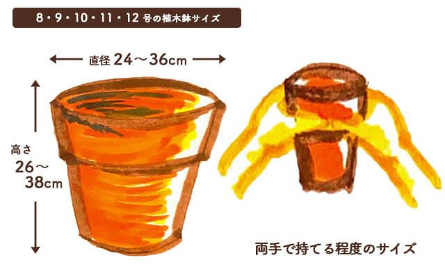 8・9・10・11・12号の植木鉢のサイズ