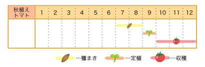 秋に栽培するトマトの栽培カレンダー