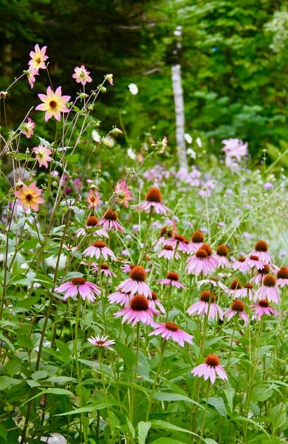 色々な宿根草