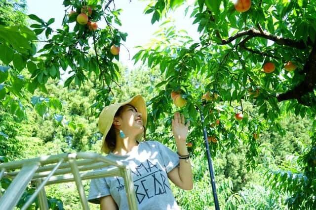 桃狩りをする女性