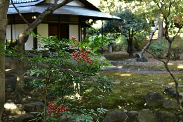 ナンテンの木と日本家屋