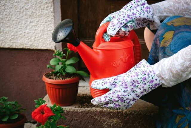 女性が選ぶ「液体肥料」のランキング