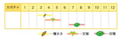カボチャのプランター栽培カレンダー