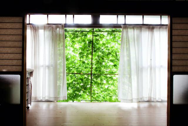 グリーンカーテンと窓