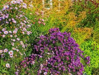 紫の花が咲く庭