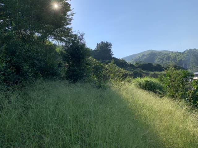 草が茂る果樹園