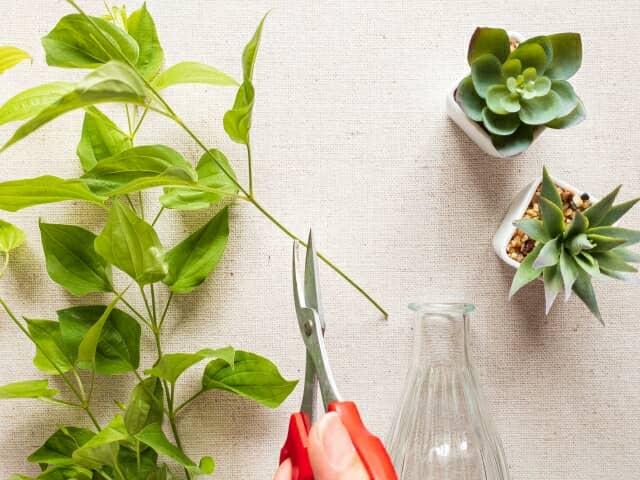 利休草を花瓶に入れる準備