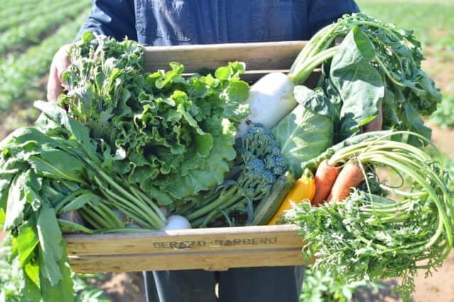 野菜セット農福