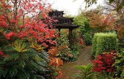 ヒイラギナンテンと庭