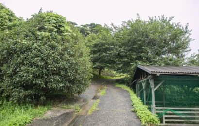 舗装された農道