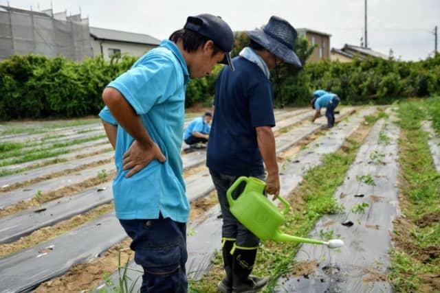 農福連携事例静岡