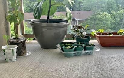植木鉢と鉢ポット