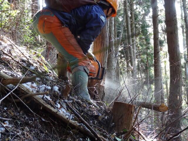 真庭市の林業