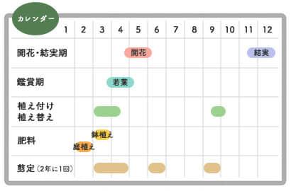 レッドロビンカレンダー