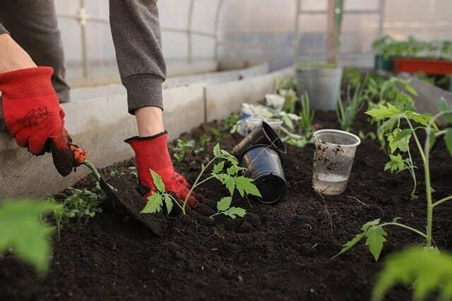 温室 田植え