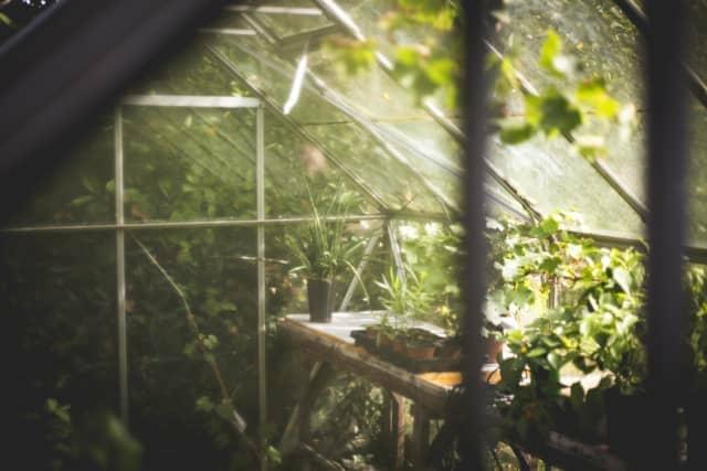温室 植物 ポット 農業 公園 緑