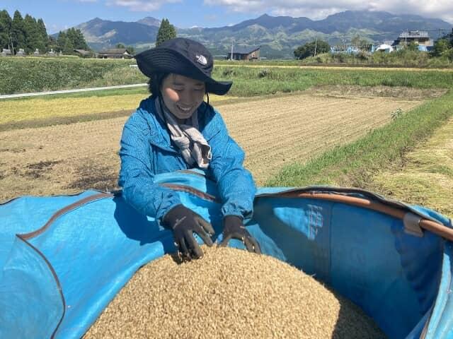 米を収穫する女性