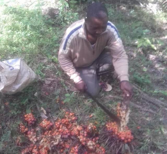 ガーナ営農指導