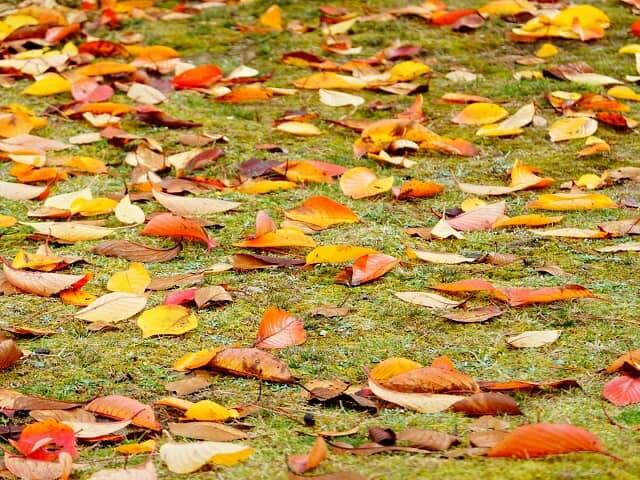 落ち葉のある庭