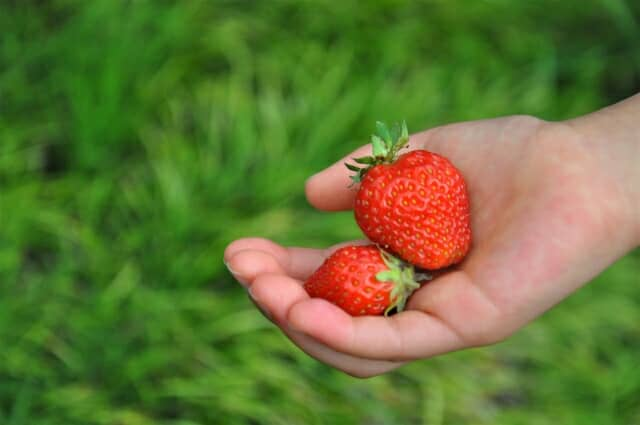イチゴを持つ手