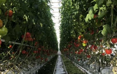 トマトパークの展望