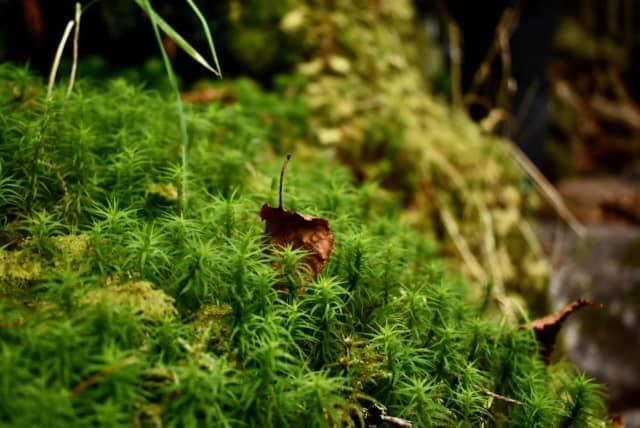 循環_枯れ葉と緑