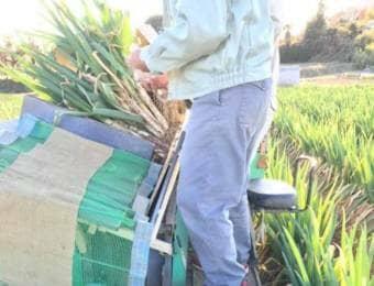 ネギの収穫に使う農機