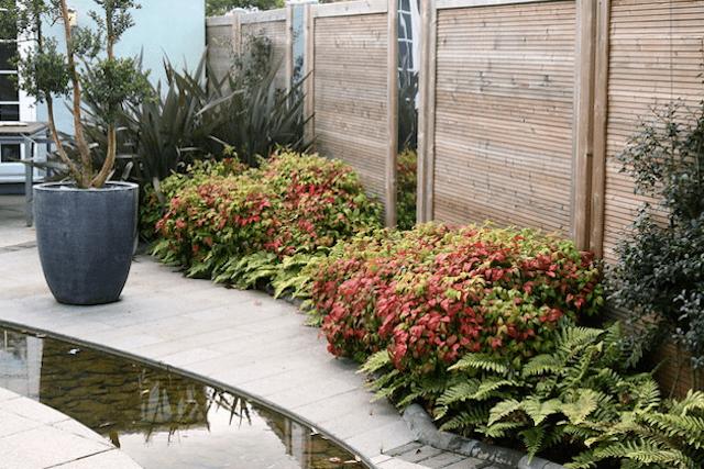 オタフクナンテンと庭