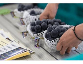 「農家直売どっとこむ」に出品する長野県の生産者を募集!