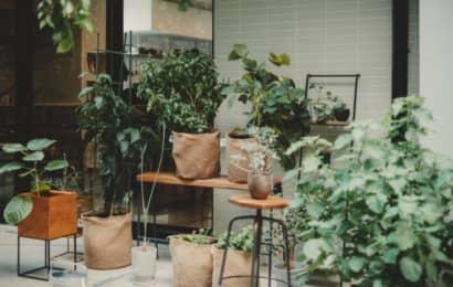 自宅の省スペースを活用した家庭菜園を提案