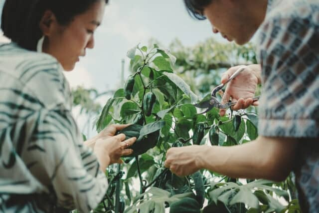 自宅で過ごす家庭菜園のある暮らしを提案