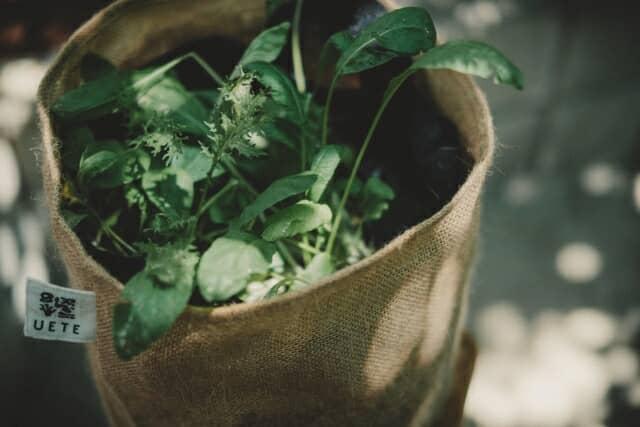 「心地の良い、遊べる菜園」
